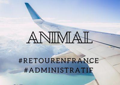 Revenir en France avec un animal